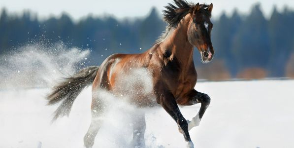 Feeding Your Horse in Winter