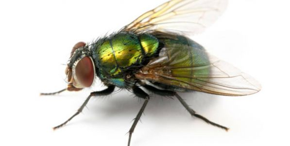 How do you choose a fly repellent or insectacide?