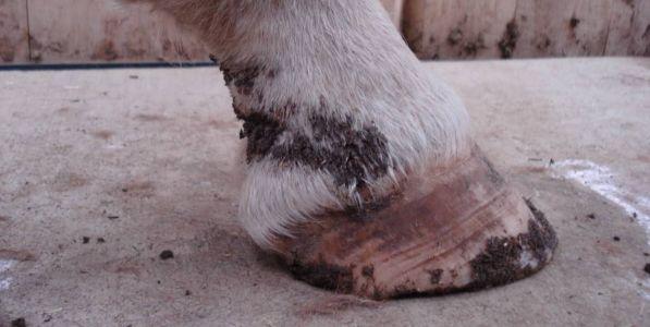 Mud Fever