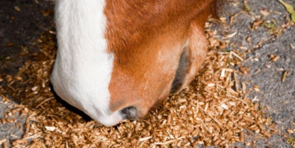 Feeding Principles - how to work out how much feed your horse needs