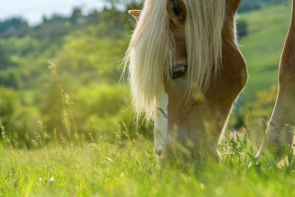 Equine Digestion Supplements