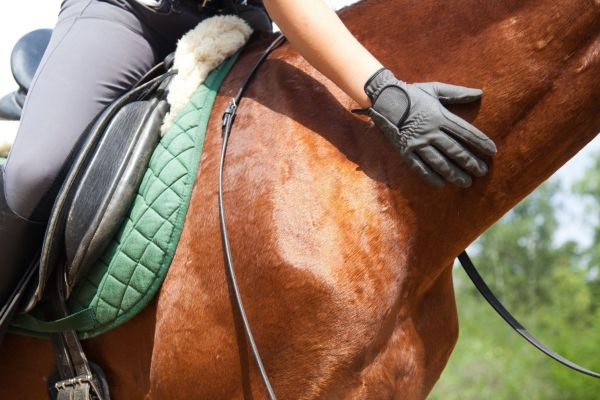 Equine Skincare Supplements