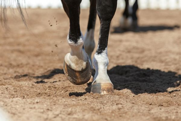 Equine Hoofcare Supplements
