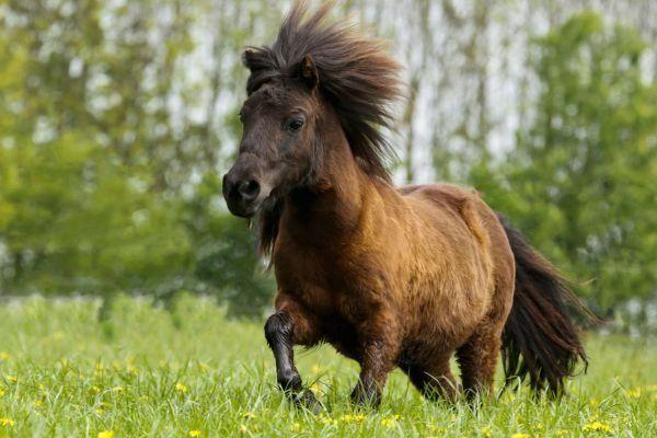 Horse Vitamins & Minerals