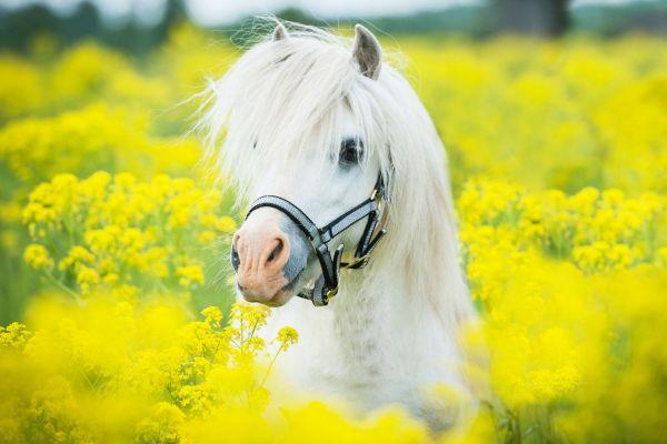 CORTAFLEX voor Paarden
