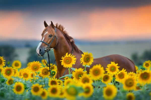 Equine Summer Supplements
