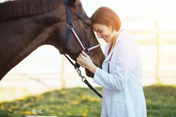 Equine Wellbeing