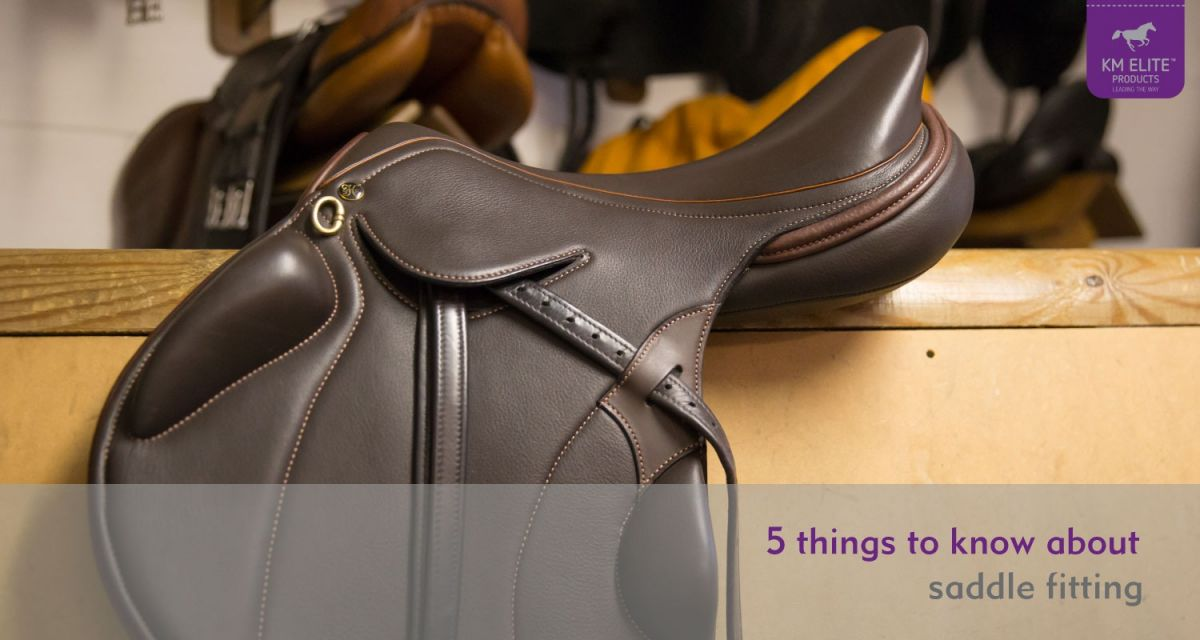 5 Things to know about Saddle Fitting