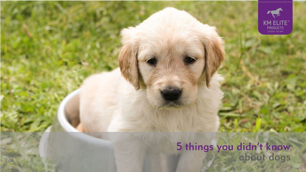 5 things you didn't know about dogs