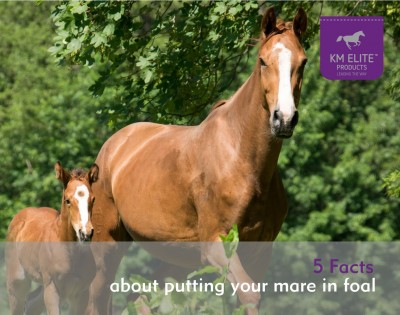 5 Facts about putting a mare in foal