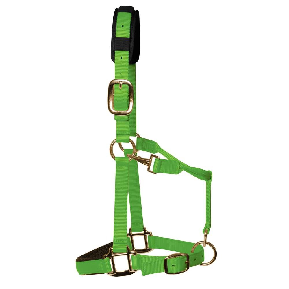 KM Elite Padded Headcollar Hot Green