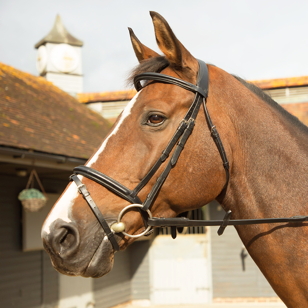 KM Elite Training Bridle Havana
