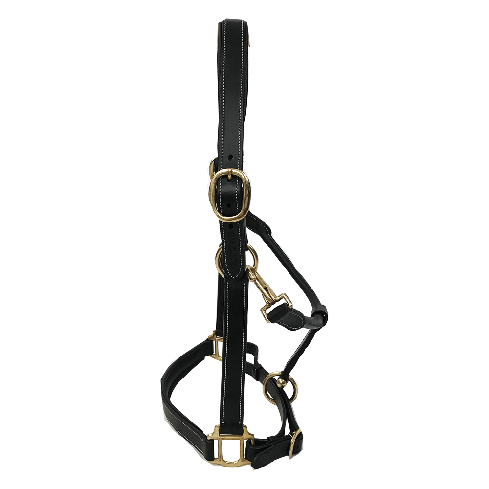 Primera Padded Leather Headcollar Black Contrast