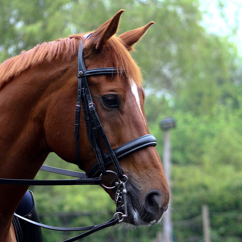 Peter Horobin Double Bridle