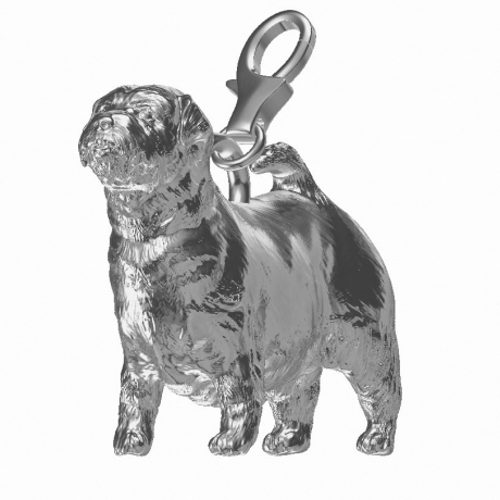 Norfolk Terrier Charm