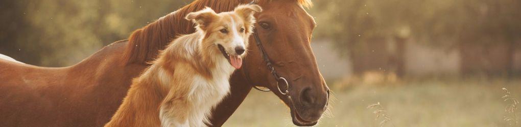 Pets & Smallholder