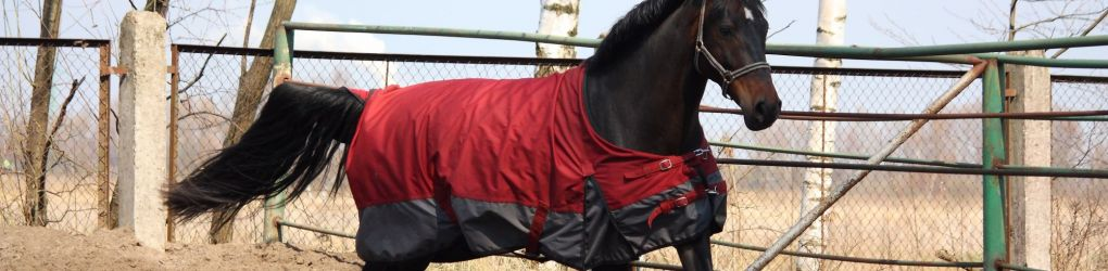Equestrian Equipment - Horse Riding Wear, Saddlery & Riding Boots