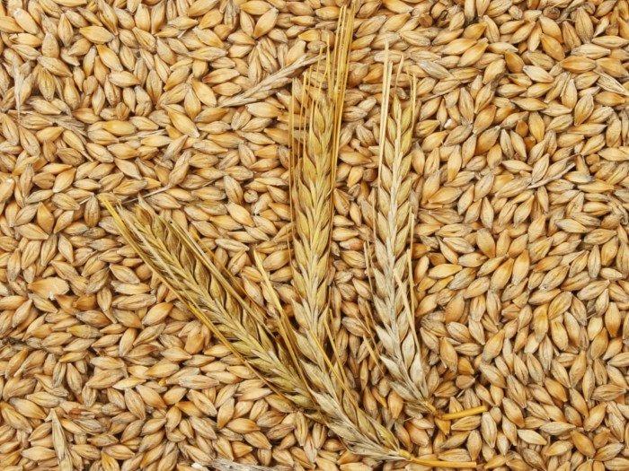 Barley Meal