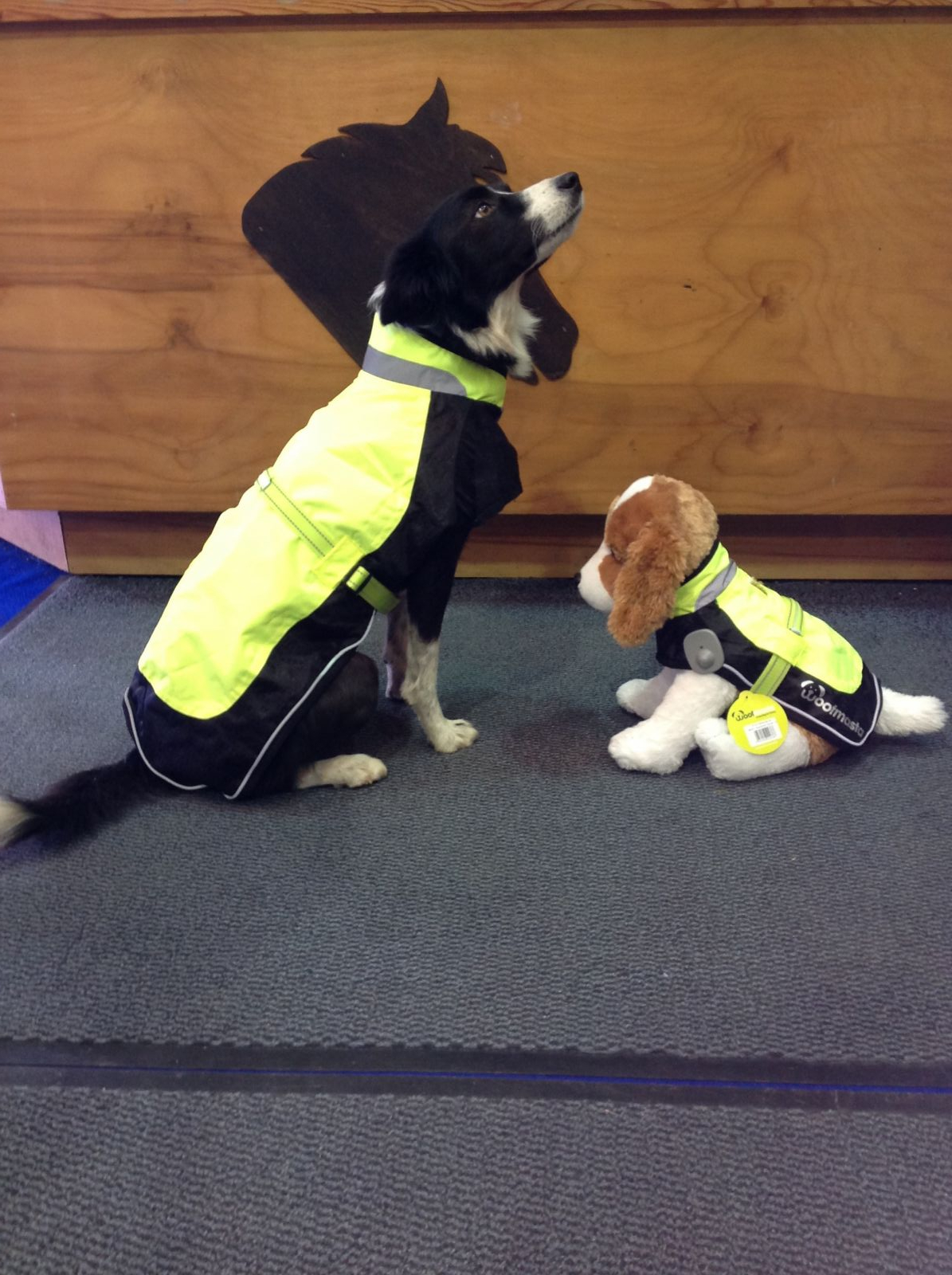 Woofmasta Hi-Viz Flashing Dog Coat